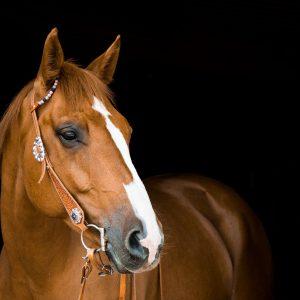 horse-3390256_1920