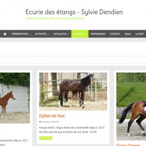 site-equia-chevaux-chevaux-a-vendre-ecurie-des-etangs-sylvie-dendien-centr_-sylviedendien-equia-fr